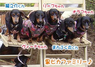 Kuropikafamily_1